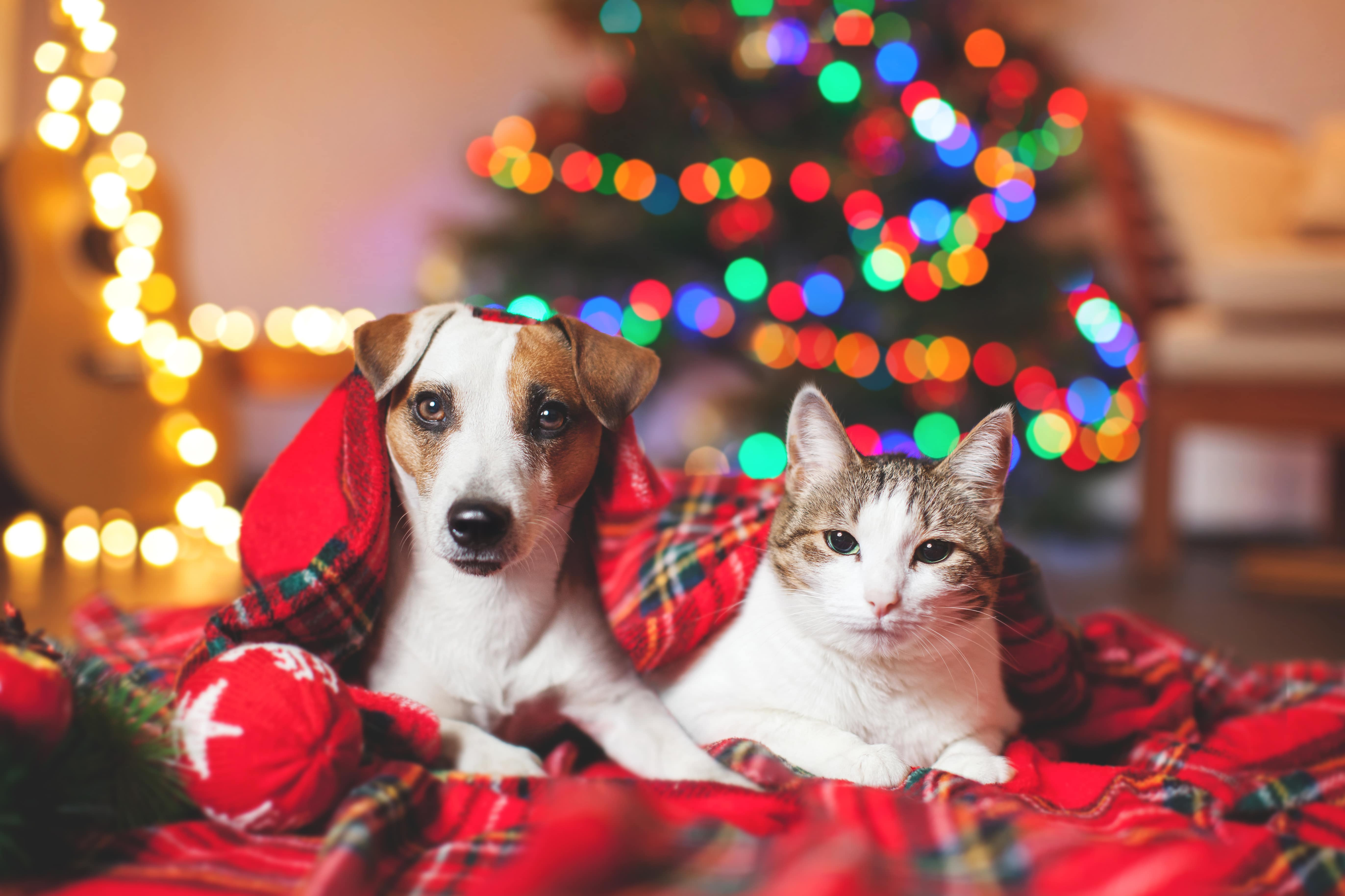 Pets safe over the holidays
